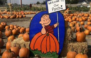 Best pumpkin patches near South Jordan Utah